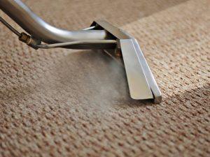 Carolina Pro Clean carpet 5